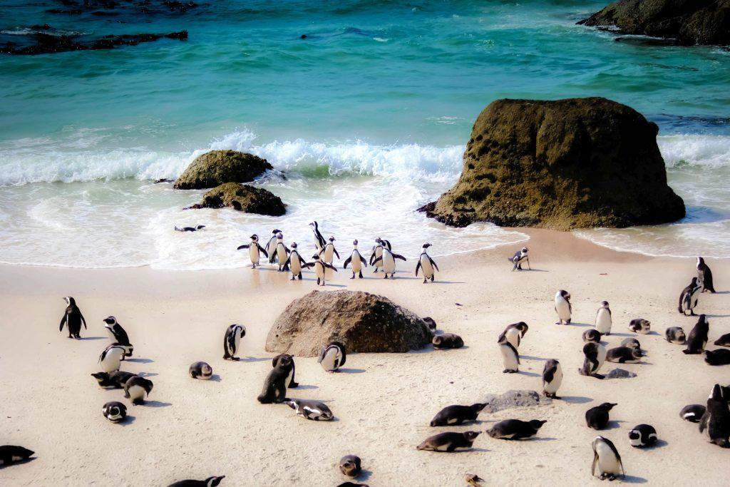Western Cape Experiences Penguin Colony