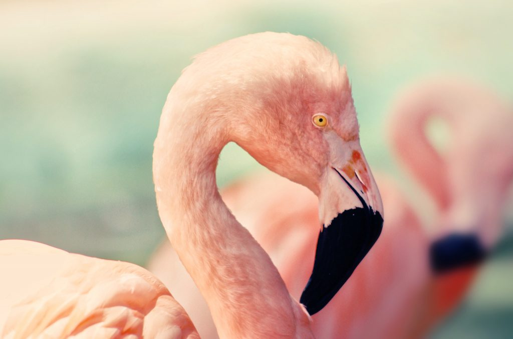 Flamingos West Coast National Park