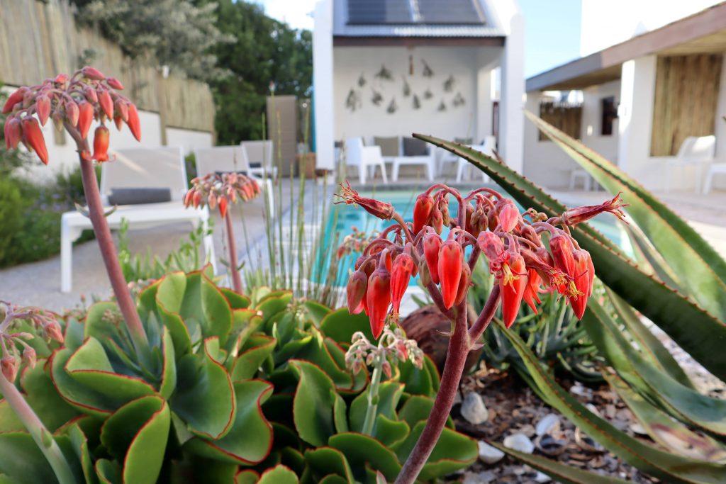 Gonana Guest House Garden